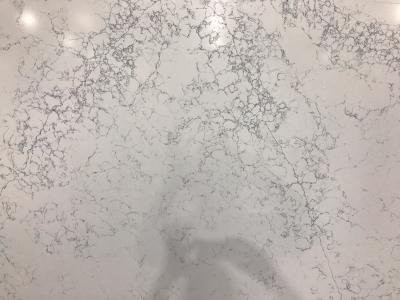 Carrara Venatino CQ